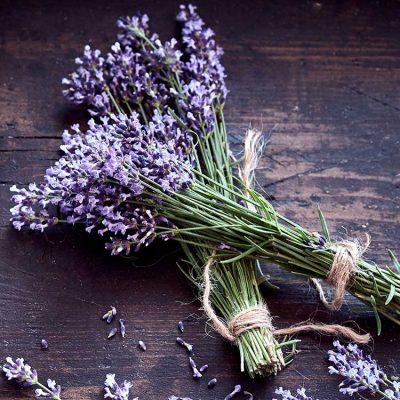 pure-lavender-square